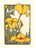 california-poppies-notecards