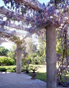 lanterman-wisteria